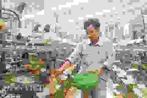 Kỹ sư bỏ nghề về nuôi chim bồ câu, lứa đầu trắng tay sau là tỷ phú
