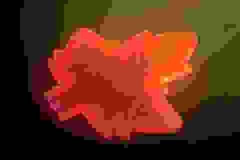Chiếc lá nhân tạo có khả năng biến ánh sáng mặt trời thành thuốc