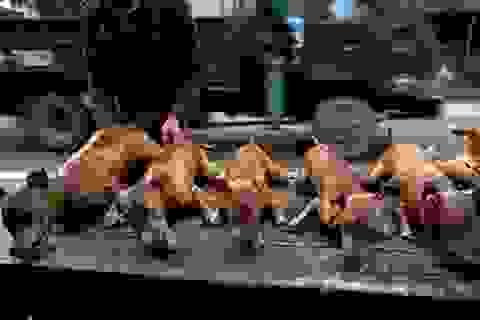 """Khuyên người dân bỏ thịt chó vì """"gây nhiều nguy hiểm"""""""