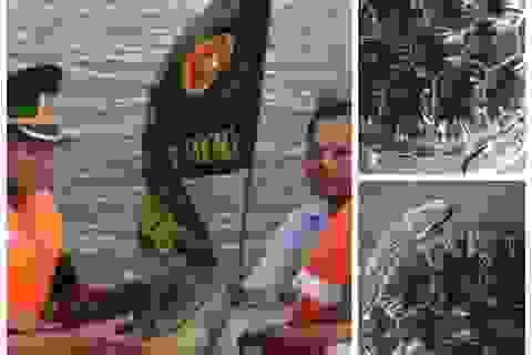 Thả cá thể rùa biển quý hiếm về với tự nhiên