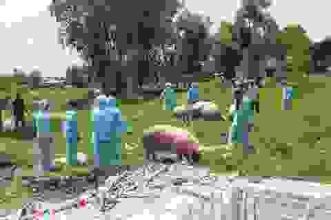 """Dịch tả lợn châu Phi """"tấn công"""" lợn của Trung tâm Giống nông nghiệp Cà Mau"""