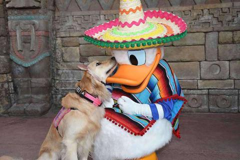 Ngộ nghĩnh tình yêu của chú chó Nala với vịt Donald