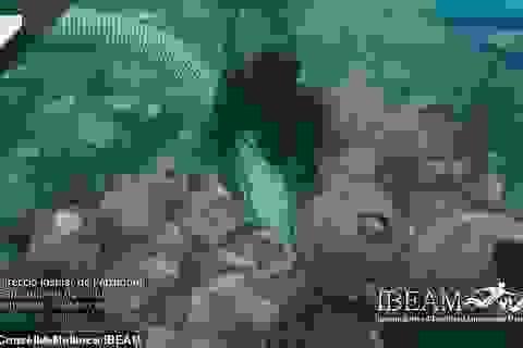 Tìm thấy 100 bình vò đựng dầu ô liu và rượu niên đại 1.700 năm