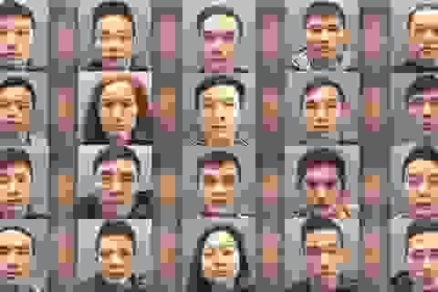 Anh tuyên án nhóm người Việt trồng cần sa quy mô lớn
