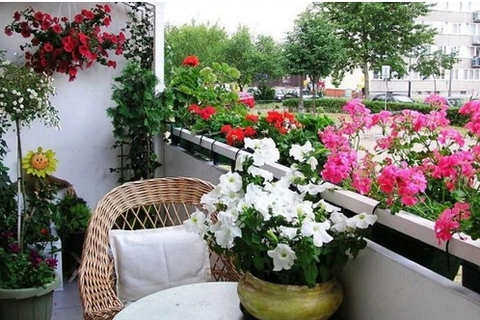 Trồng cây cảnh ở ban công chung cư, làm sao để vừa đẹp vừa nhàn?