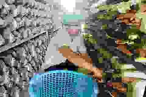 Bỏ dạy nghề về trồng nấm linh chi, mỗi năm thu hơn 1 tỷ đồng
