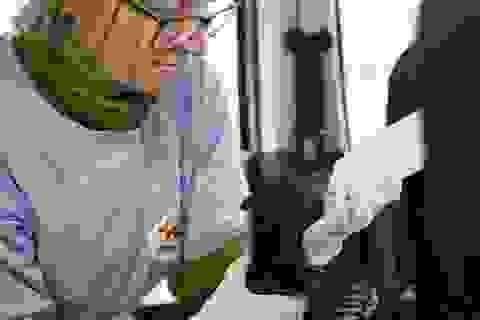 Giải cứu 2 cá thể gấu ngựa đang bị đem bán