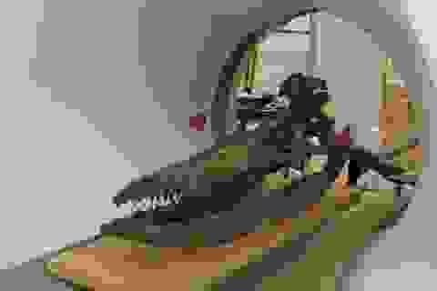 """Hộp sọ """"quái vật biển"""" tiết lộ bí mật sau hơn 60 năm được phát hiện"""