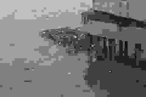 Hà Nội: Sông Hồng xuất hiện nhiều củi rác trôi dạt