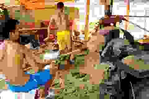 Báo động ô nhiễm môi trường và mất an toàn lao động tại Nghệ An!