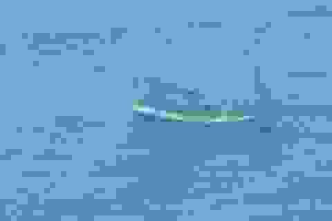Một tàu cá đang vào bờ tránh bão thì hỏng máy