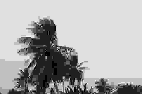 Bạc Liêu, Cà Mau sẵn sàng ứng phó ảnh hưởng của bão số 1