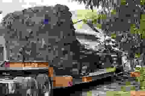 """Lại phát hiện xe chở cây """"quái thú"""" trên đường"""