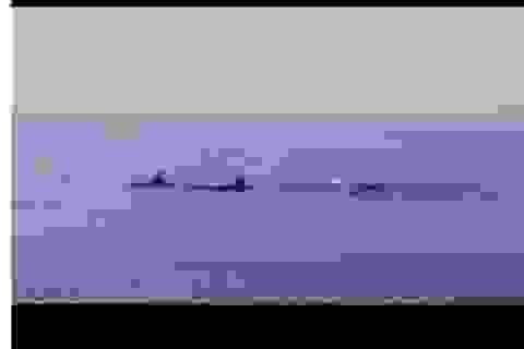 Ngỡ ngàng ngắm đàn cá heo trăm con bất ngờ xuất hiện ở biển Cửa Đại