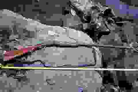 Thông tin làm rõ cái chết nhiều bất thường của người đàn ông trong rừng