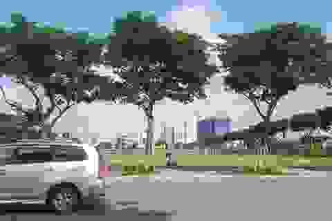 Thua kiện doanh nghiệp, UBND TP Đà Nẵng kháng cáo