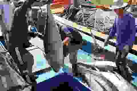 Doanh nghiệp XKLĐ phái cử gần 12.000 thuyền viên làm việc ở tàu cá nước ngoài