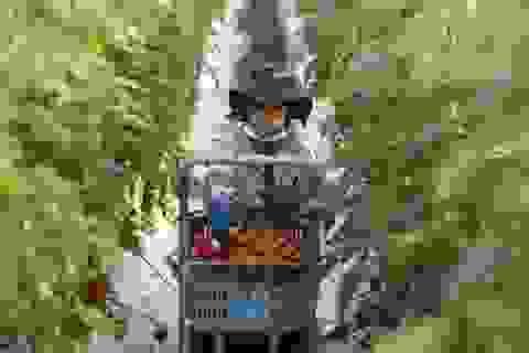 Việt Nam đứng thứ hai về số sinh viên được cấp thị thực làm việc tại Nhật Bản