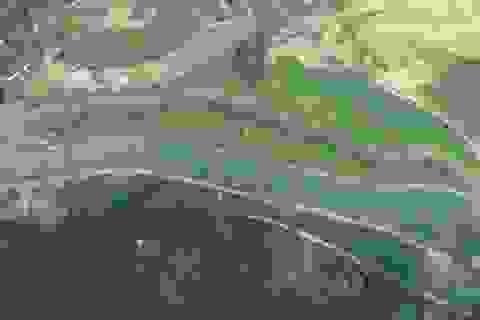 Nhà máy nước Sông Đà xin lỗi, miễn tiền nước 1 tháng cho người dùng