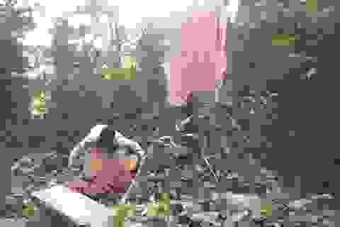 UBND tỉnh Gia Lai chỉ đạo làm rõ việc rừng cổ thụ Mang Yang bị phá tan hoang!