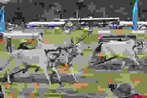 Người dân An Giang bắt tay làm du lịch trách nhiệm