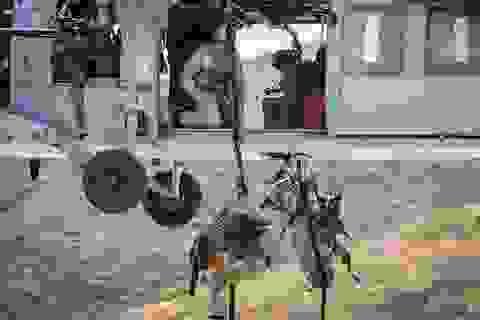 Quy trình đào tạo khắc nghiệt lực lượng khuyển đặc nhiệm của quân đội Mỹ