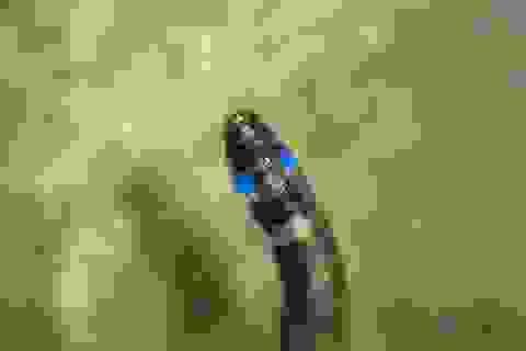 Phát hiện loài sinh vật sống đầu tiên phát sáng màu xanh ở Nam Mỹ
