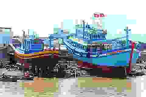 Tổng cục Thủy sản nói gì về 55 tàu đóng theo Nghị định 67 không hoạt động?