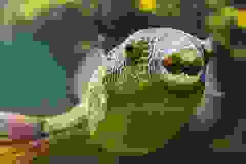 Khoa học cùng với bé: Cá có ngủ không?