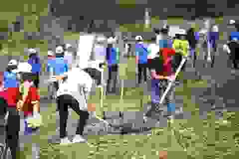 """Hàng nghìn người trồng 2.000 cây Thông Mã Vĩ trên đồi cây """"Dâng Bác - Ơn Thầy"""""""