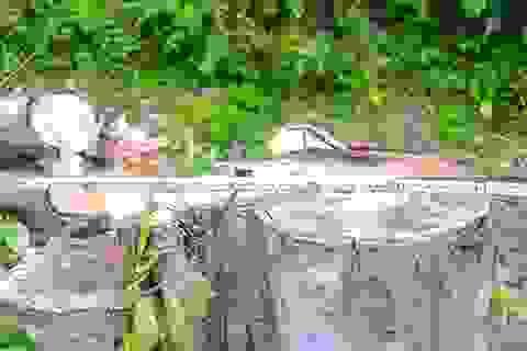 5 cán bộ xã bị kỷ luật vì để xảy ra phá rừng