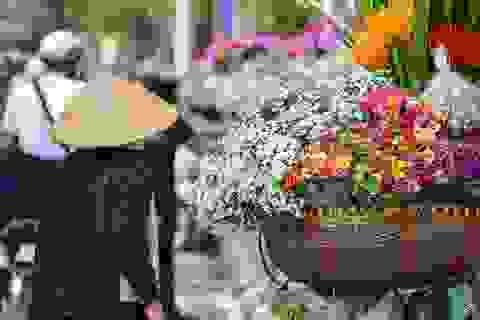 """Dạo quanh Hà Nội ngắm """"họa mi"""" dịu dàng xuống phố"""