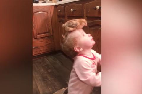 Chết cười với phản ứng của bé trước động vật nuôi và thú cưng