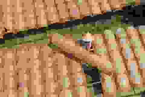 Làng nghề bánh tráng Cù Lao Mây mong vụ Tết