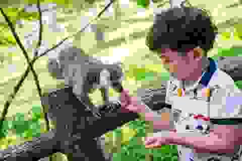 Hội nghị Bảo tồn và Phúc trạng động vật lớn nhất Đông Nam Á