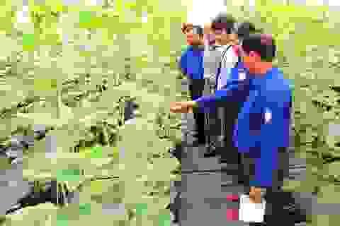 Đào tạo nhân lực cho ngành nông nghiệp công nghệ cao