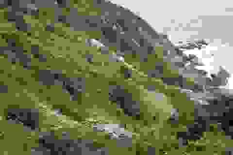 Đà Nẵng tìm kiếm du khách Canada mất tích ở Sơn Trà