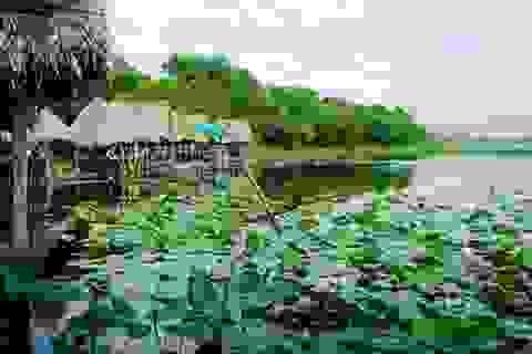 Đầu tư Khu du lịch sinh thái nghỉ dưỡng 100 tỷ đồng tại Trằm Trà Lộc