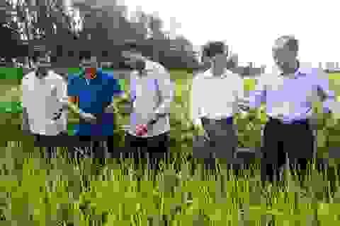 An Giang: Ngành lúa gạo và thủy sản An Giang đạt kết quả nổi bật nhờ ứng dụng công nghệ cao