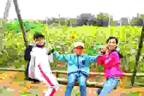 Giới trẻ đổ xô check-in cánh đồng hoa hướng dương gần Hội An