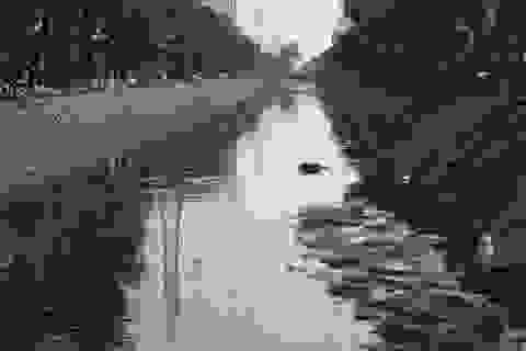 """Hình ảnh những dòng sông bốc mùi ở Hà Nội mòn mỏi chờ """"hồi sinh"""""""