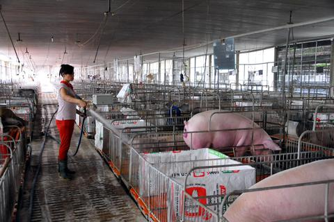 Mất hơn 1 triệu con heo, Đồng Nai hỗ trợ người chăn nuôi tái đàn