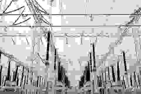Công ty Philippines lên tiếng chuyện Trung Quốc có thể tắt mạng lưới điện quốc gia