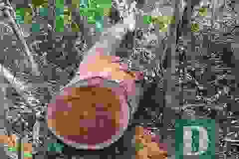 Nhiều nhân viên bảo vệ rừng bỏ việc vì nghề nguy hiểm, lương không đủ sống