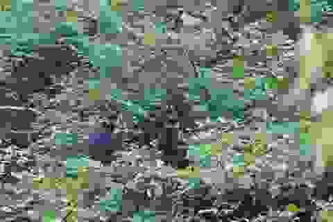 Bảo vệ loài voọc đen gáy trắng quý hiếm trên 6 khối núi đá vôi ở Quảng Bình