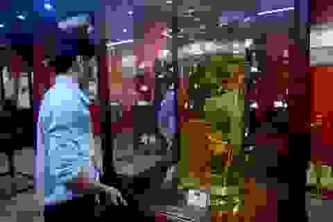 """Chiêm ngưỡng bảo tàng """"báu vật đại ngàn"""" sâm Ngọc Linh ở TP.HCM"""