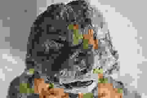 Kỳ lạ xác ướp sư tử, cá sấu, mèo trong các kim tự tháp Ai Cập