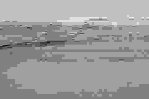 Đã xác định được nguyên nhân làm nước biển đổi màu