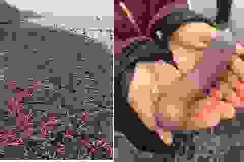 """Hàng ngàn con cá """"hình thù lạ"""" dạt vào bờ biển Mỹ"""