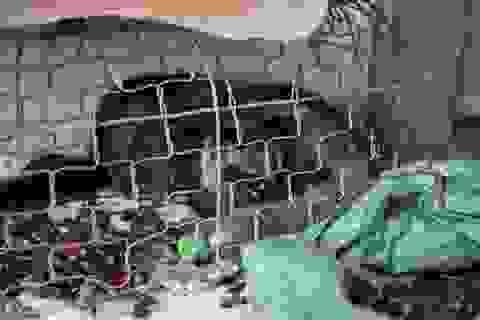 Thú rừng chết mòn trong kho hải quan: Phạt người vận chuyển 80 triệu đồng